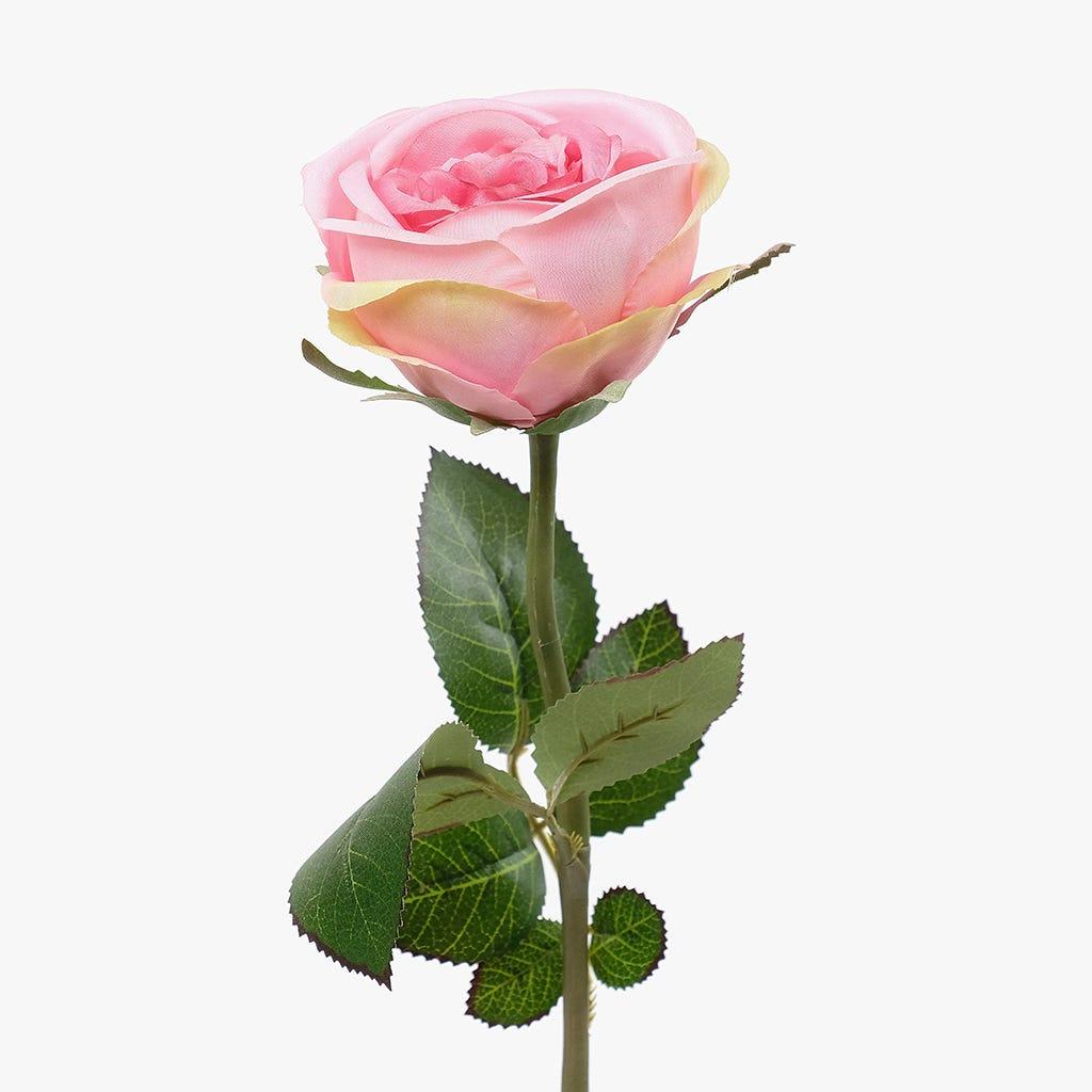 Rosa Côr de Rosa 55 cm