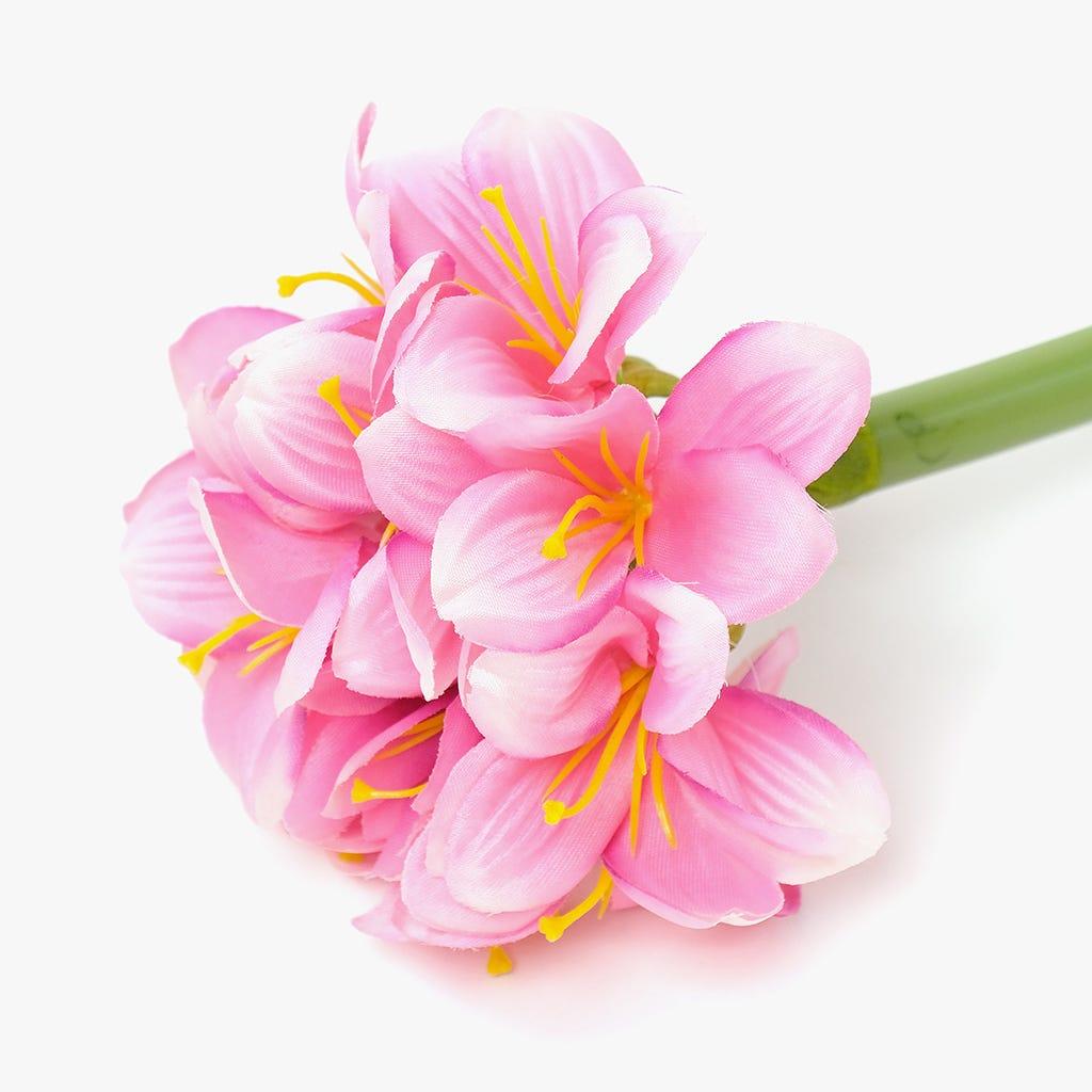 Amarylis Rosa 65 cm