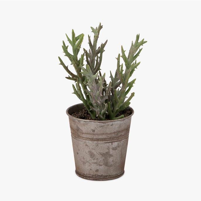 Vaso suculenta Tutuaca 16 cm
