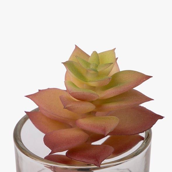 Vaso suculenta Tutuaca 9 cm
