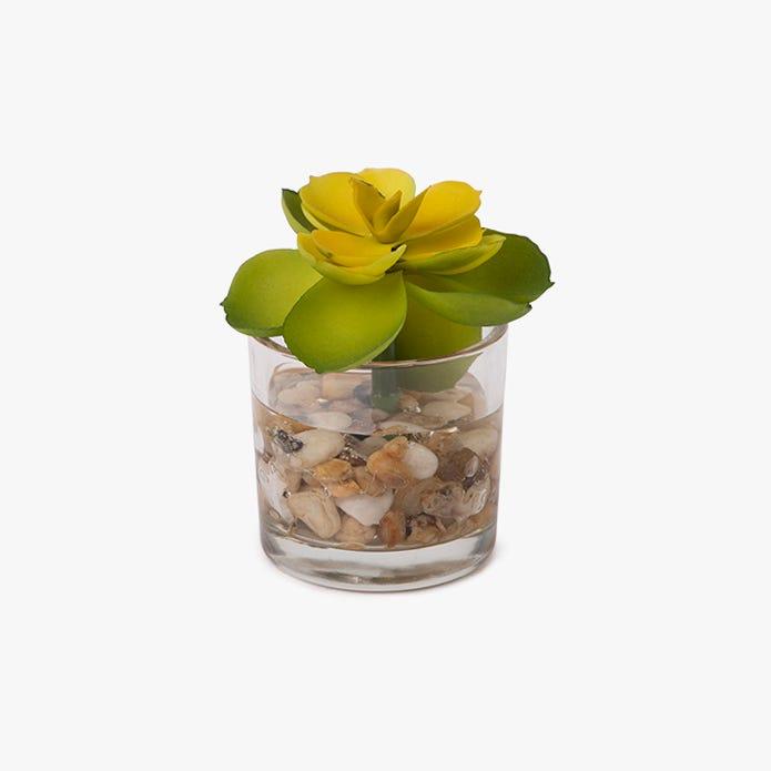 Vaso suculenta Tutuaca 8 cm