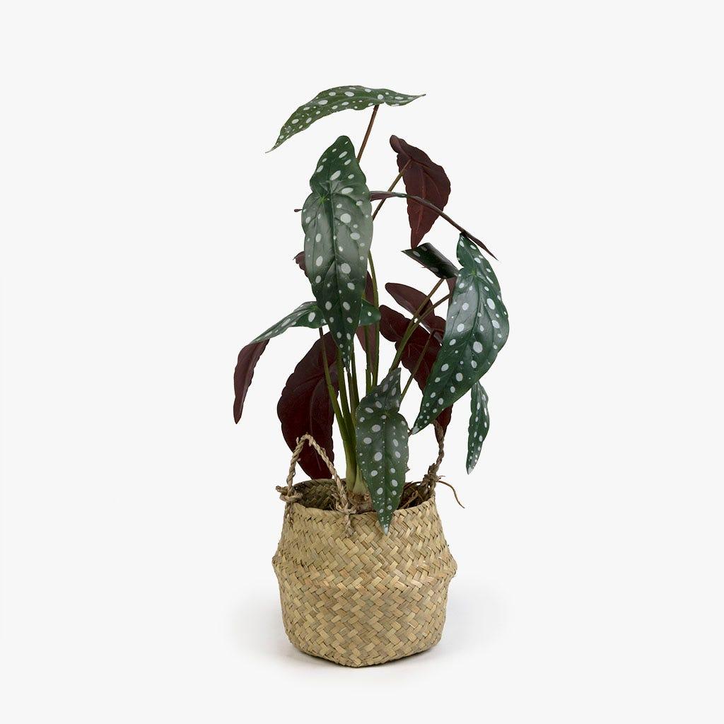 Begónia artificial 56 cm