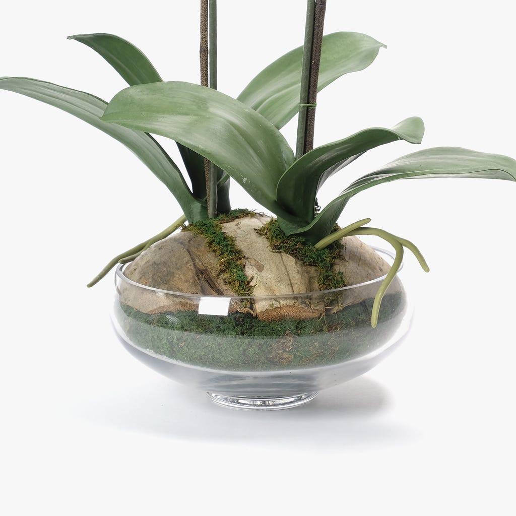 Orquídea Branca 62x37 cm