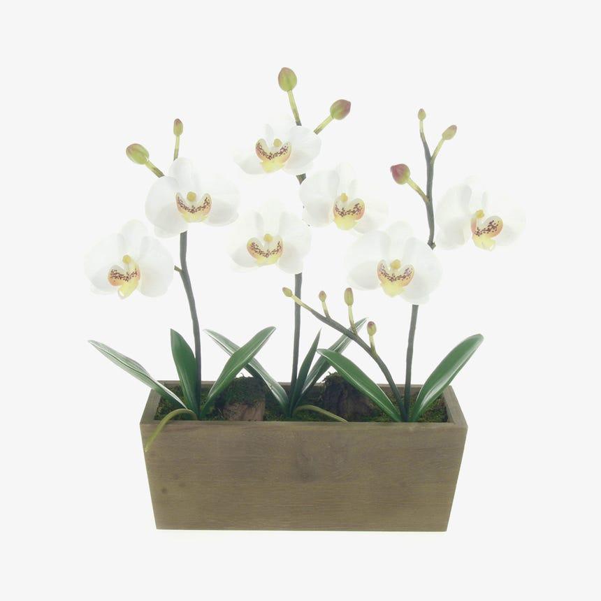 Maceta Orquidea Blanco 30 cm
